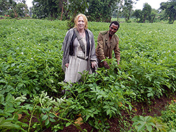 Ethiopian farmers produce Quality Declared Seed (QDS) for the potato value chain